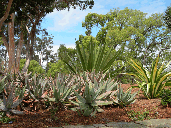 Photo from Master Gardeners website