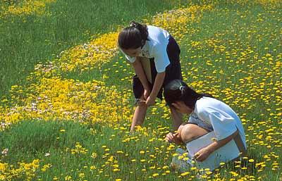 Photo from California Native Plant Society